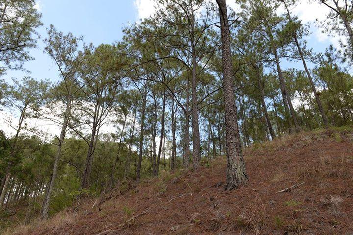 Medio Ambiente recupera terrenos de proyecto forestal fronterizo que fueron invadidos por particulares de manera ilegal