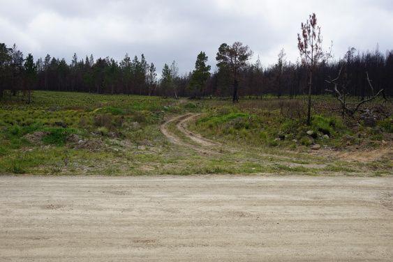 Entrada a la primera ubicación. No se ven los troncos desde vía principal.