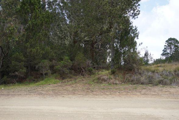 Entrada a la segunda ubicación. Tampoco se ven los troncos desde la vía principal