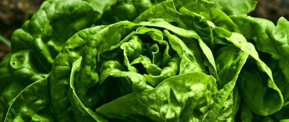ADIA afirma nueva plaga afecta a más de 150 especies de frutas y vegetales