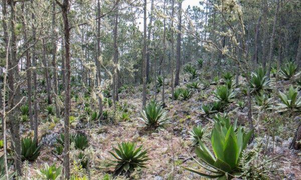 En la siguiente foto puede verse el tipo de bosque en la zona y en el mapa la ubicación del descubrimiento.