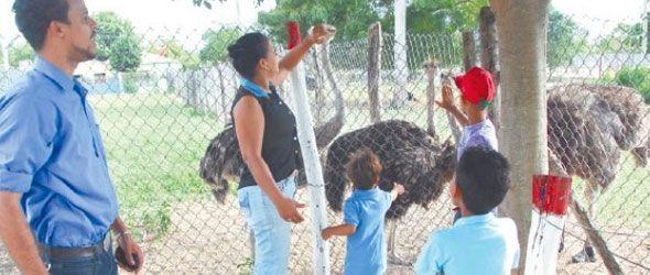El zoológico de Gurabo: una opción de aprendizaje