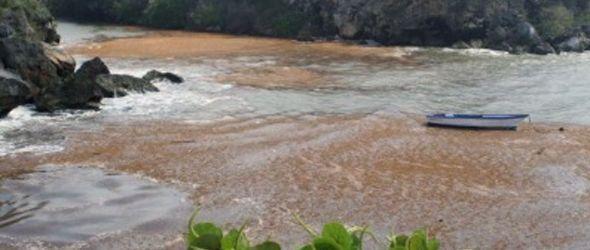 Miles de peces mueren en el río Yuma por vertido de químico desconocido