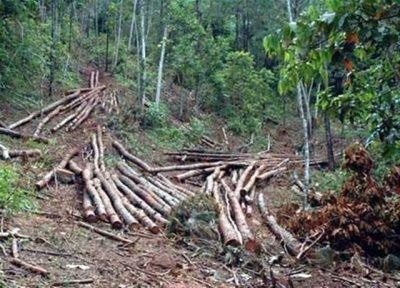 Medio Ambiente advierte no permitirá invadan terrenos en Loma Novillero