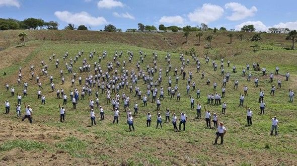 Empleados del Popular plantan 5,260 árboles de caoba en SJM