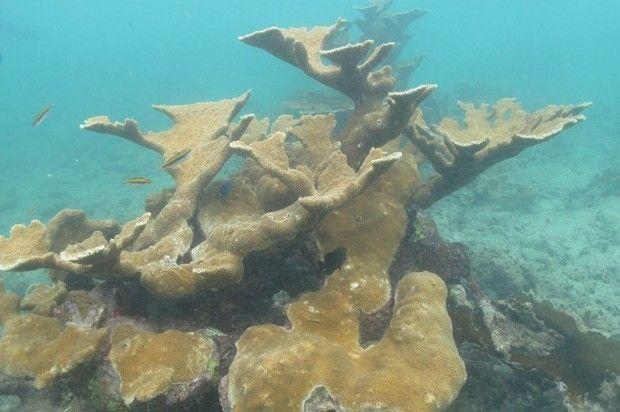 Un museo escondido en el fondo del mar