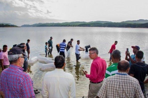 Falcondo, Codopesca, Universidad ISA y el Cimpa liberan 50 mil peces en presa Rincón