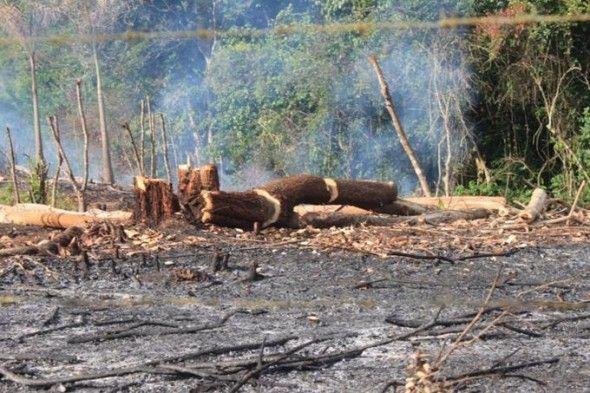 """Miles de árboles han sido derribados en las últimas semanas en una extensa zona boscosa de este distrito municipal perteneciente a Yamasá, provincia Monte Plata, acción que ha sido calificada como un """"crimen ecológico"""" por varias entidades ambientalistas."""