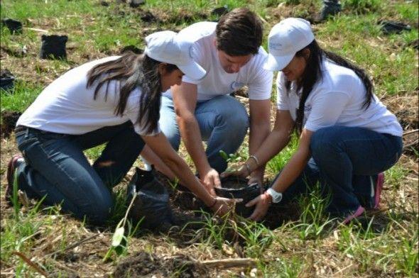 Brugal desarrolla jornada de reforestación; planta 2200 mangles en la Laguna Mallén