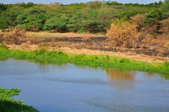 Manos criminales queman árboles ribera del Yaque