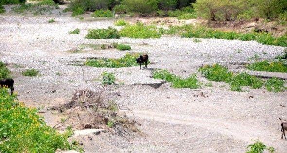 Seis ríos están totalmente secos en varios municipios de Puerto Plata