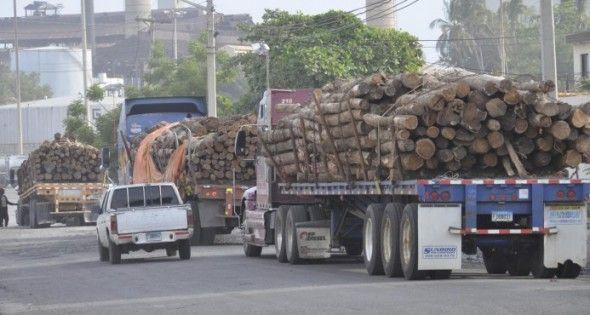 Demandan que Medio Ambiente revise la resolución sobre corte de árboles