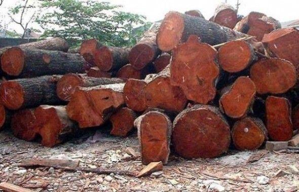 madera-casabe