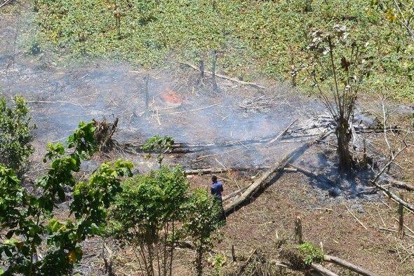 Medio Ambiente apresa y somete a la justicia al presidente de la Sala Capitular de San José de Ocoa por quemar miles de tareas de árboles