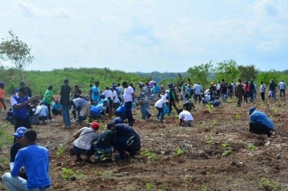 Empleados del CEA inician siembra de 35 mil árboles en San Pedro de Macorís