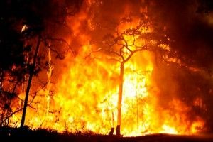 fuego_forestal