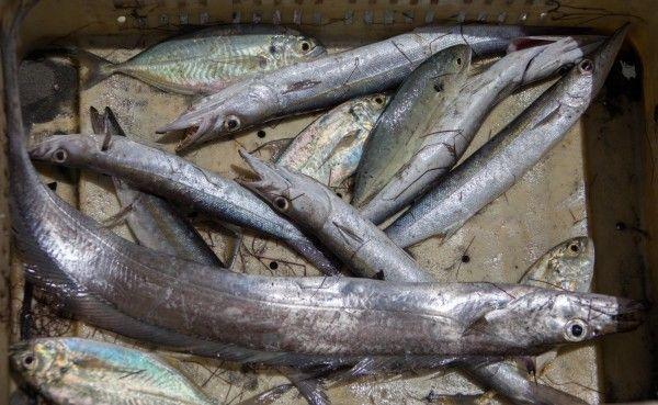 pesca_montecristi