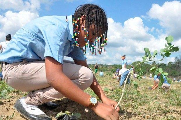reforestacioncambioclimatico