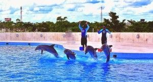 dolphindiscovery