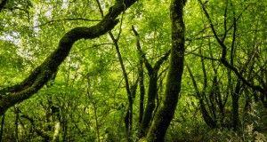 bosquesdelmundo