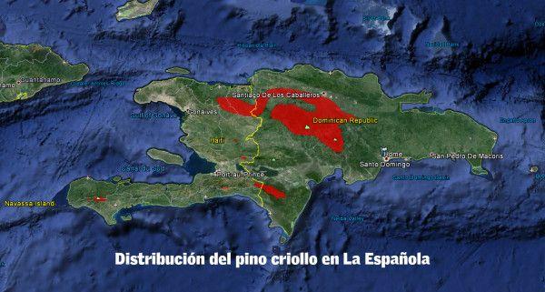 Distribucion Pino Criollo
