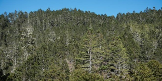 biodiversidadpnuma