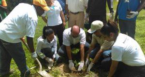 reforestacionpuntacana