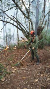 incendioforestaljarabacoa