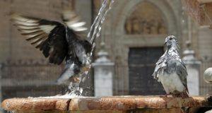 avescambioclimatico
