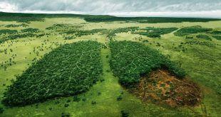 deforestacionpreso