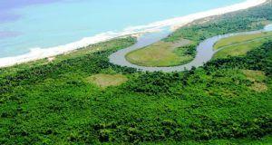 manglarespuertoplata