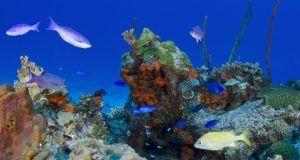 coralesconservacion
