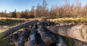 deforestacionbosquesrd