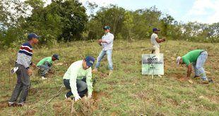 reforestacionelcercado