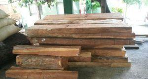 maderacardonailegal