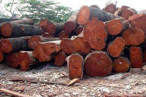 maderapuertoplatavalverde
