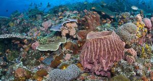 coralescaribe