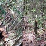 Álvaro Arvelo condenó este martes las acciones de la minera Falcondbrige Dominicana contra los terrenos de Loma Miranda, donde practica la tala de árboles en grandes cantidades.