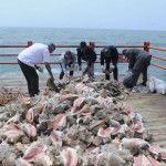 MP retorna al mar diferentes tipos de especies marinas incautadas a empresario de nacionalidad China