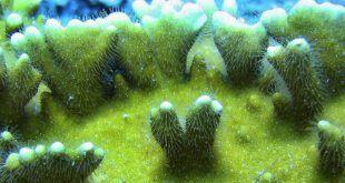 Plantas Submarinas Corales Florida